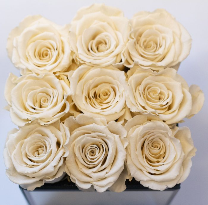 Freeze Dried Roses
